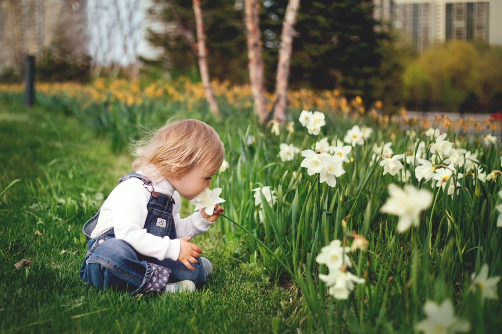 french daffodil child smelling flowers