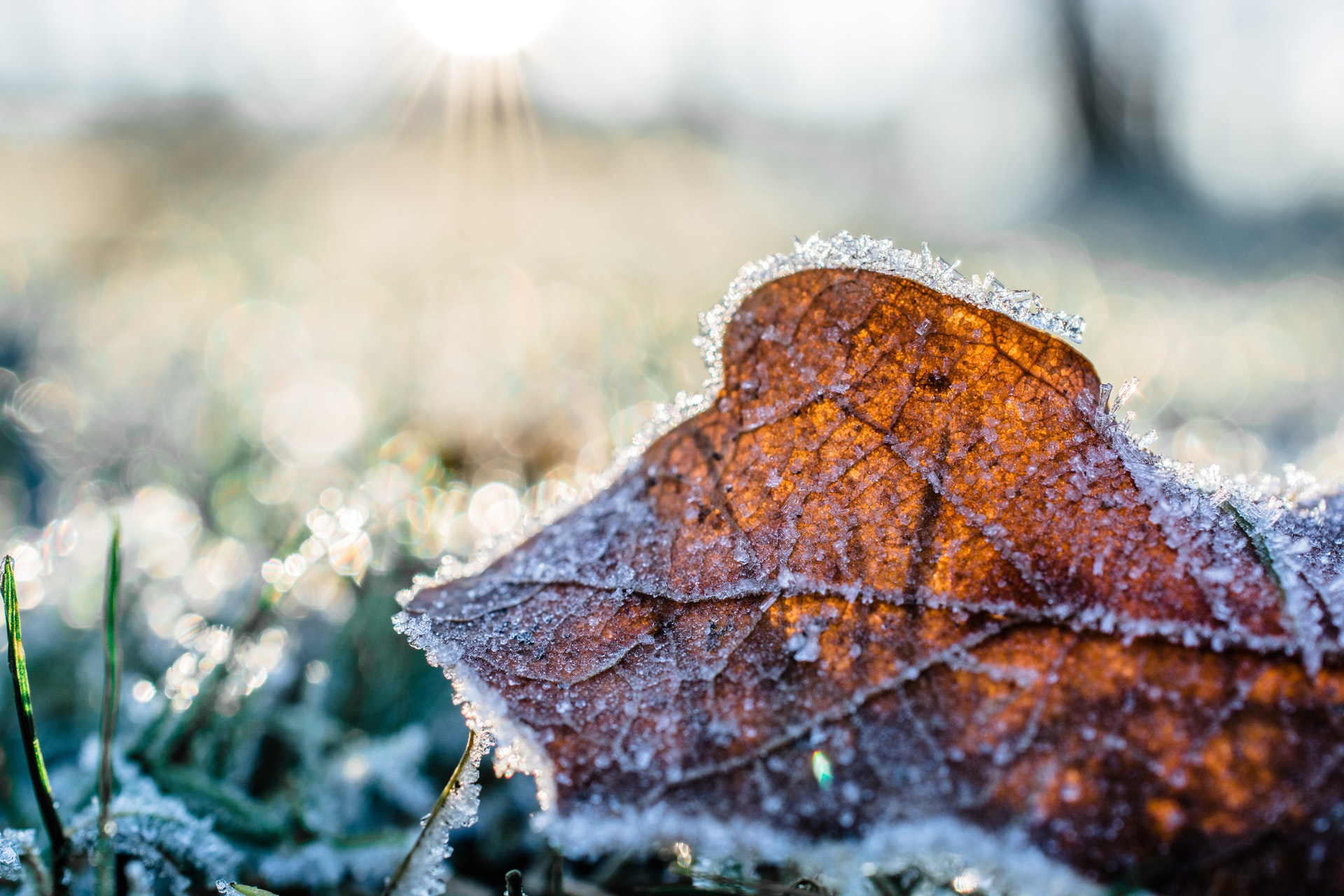 how to prepare garden for winter