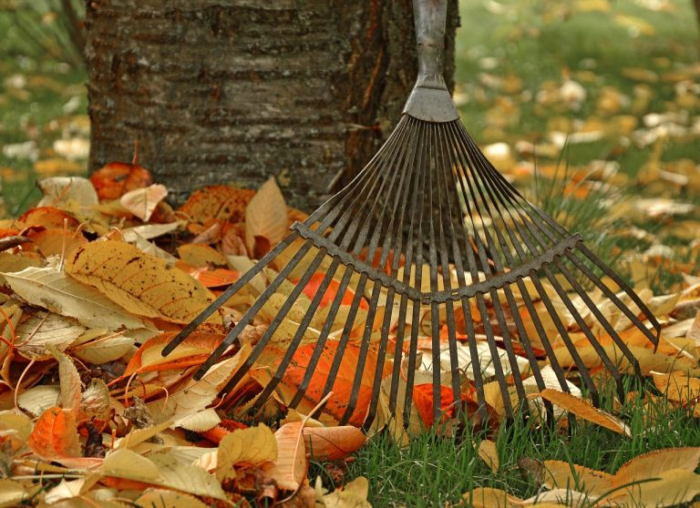 what to do with leaves in yard